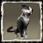 Cavalier Wildcat inv.png