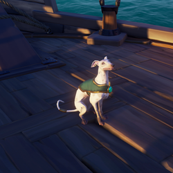 Ashpaw Whippet S.png
