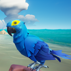 Azure Macaw1.png