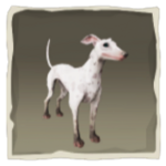 Ashpaw Whippet inv.png