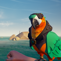 Bright Belly Macaw PL.png