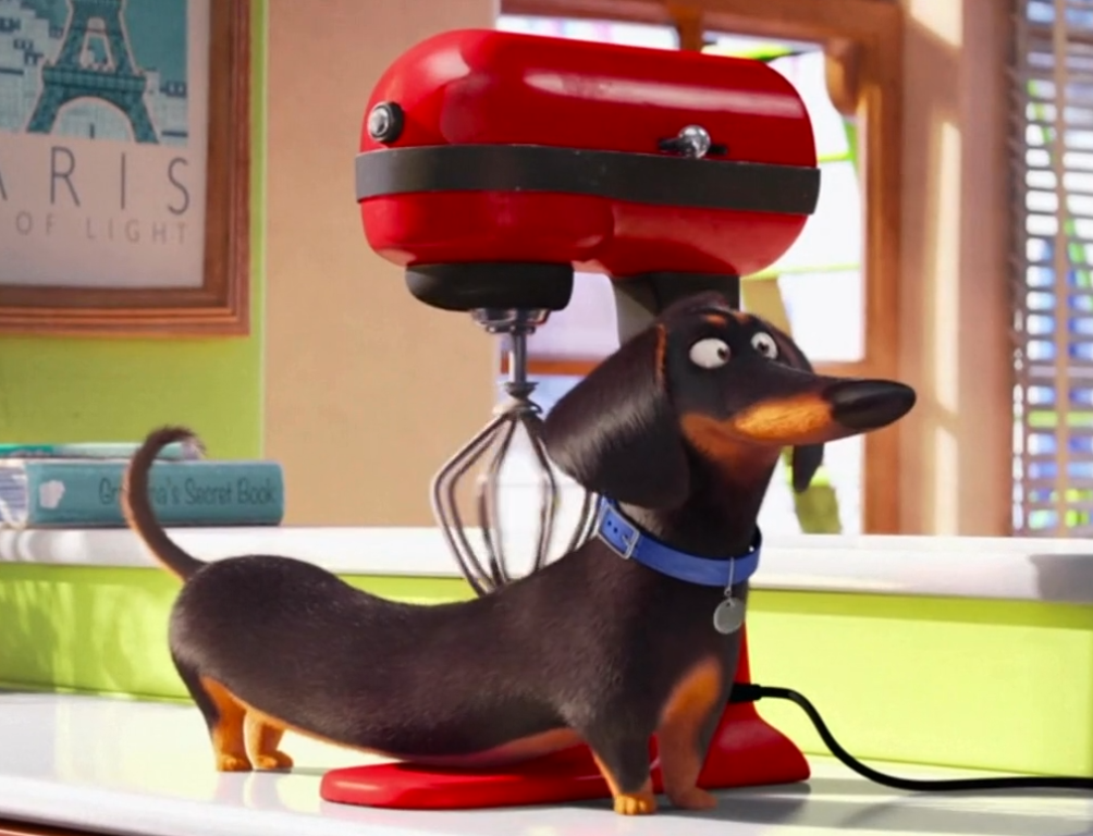 Buddy The Secret Life Of Pets Wiki Fandom
