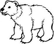 Bear Character Art