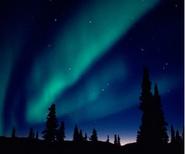 A.borealis