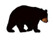 Bear outline1