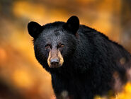 Blackbear-headshot