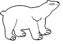 Медведица короткошерстная.png