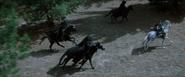 Course poursuite cavaliers noirs-Arwen