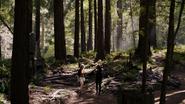 2x06Redwoods