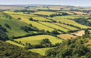 English pasture