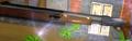 Pump-action shotgun Alpha
