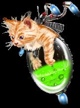 Torcher Kitty