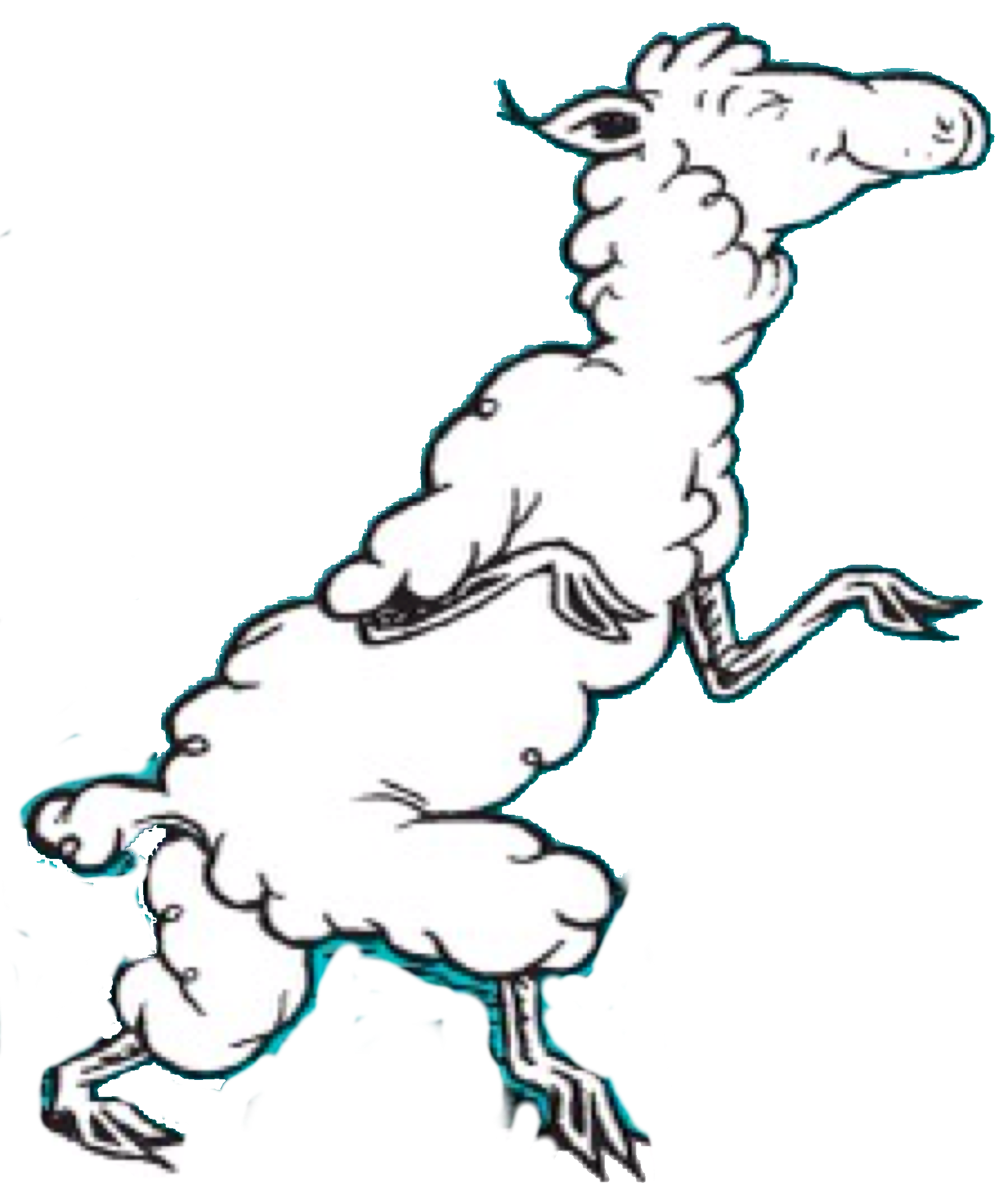 Sleepwalking Sheep