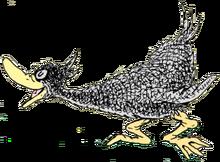 Black Duck.PNG