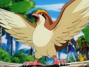 Ash's Pidgeot.jpg
