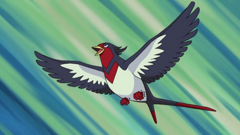 Ash's Swellow.PNG