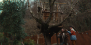 304 Otis and Jakob help build a treehouse in the Milburn House