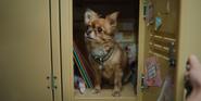 302 Ruby's dog
