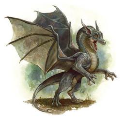 Gray Dragon wyrmling