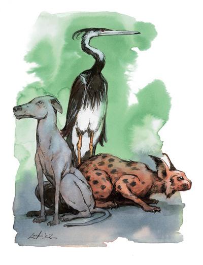 ZwierzÄ™