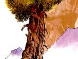 Ostatnie drzewo
