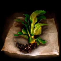 Thera Leaf
