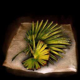 Pure leafsh.jpg
