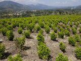 Andes Cartel
