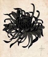 Chrysanthemum (Internet)
