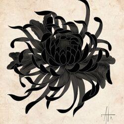 Black Chrysanthemum