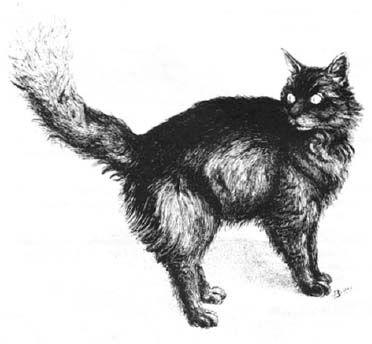 Critter Blackberry cat.jpg