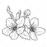 Blossoms (Internet)