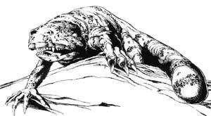 Critter Gila Demon.jpg