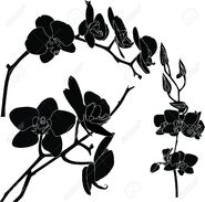Black Orchid (Internet)