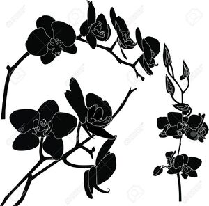 Black Orchid (Internet).jpg