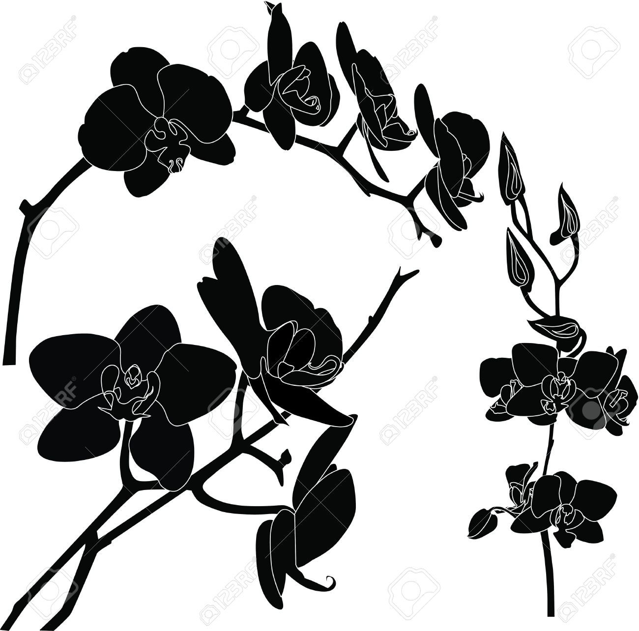 Black Orchid Triad