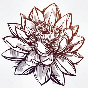 Lotus Flower (GetDrawings.com).png