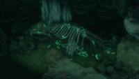 Great Carp Bones