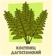 Костенецкий Алексей