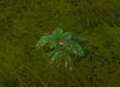 Ginseng plant.png
