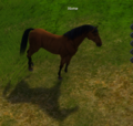 Horse (brown).png