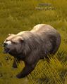 Dire Bear.png