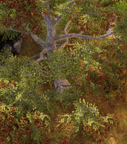 Ash tree.png
