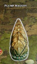 Plump Maggot