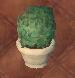 Round Bush Potted Plant