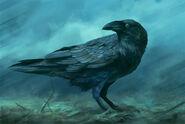 Corvus.Corax