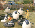 Sheeps and the tires