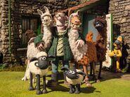 The Farmer's Llamas Promotional Image 3