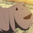Medusa Hund