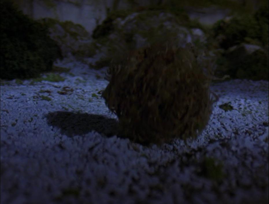 The Tumbleweed